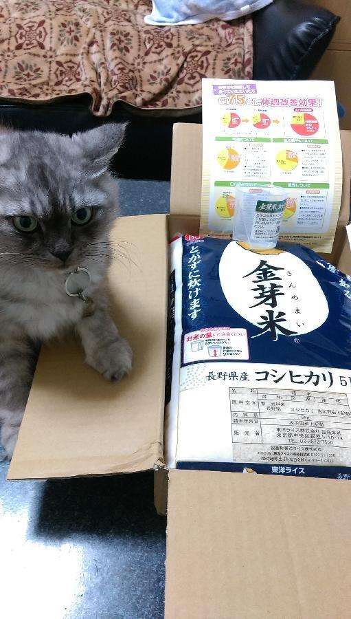 五才のオス猫〈雑種〉の体重について。現在6キロ …